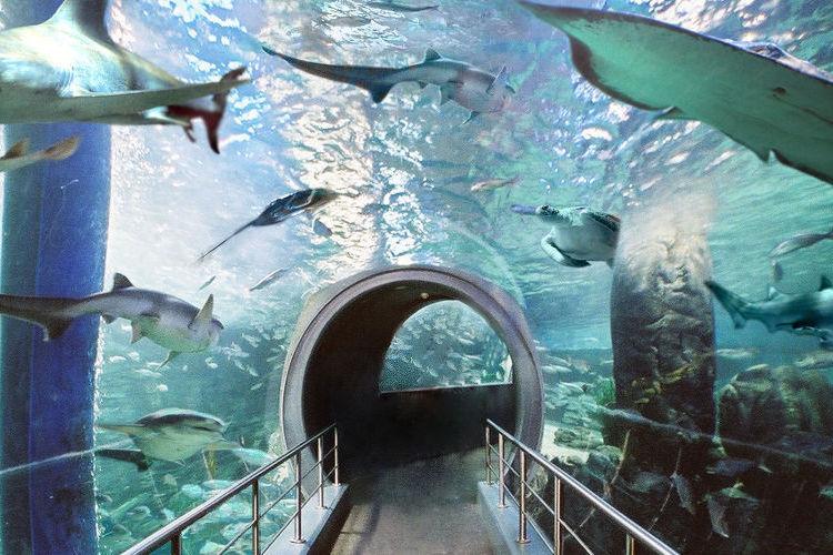 シーライフ・メルボルン水族館の写真