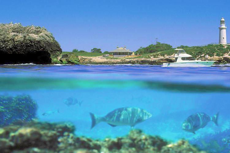 ロットネスト島 往復フェリー&バスガイド...の写真