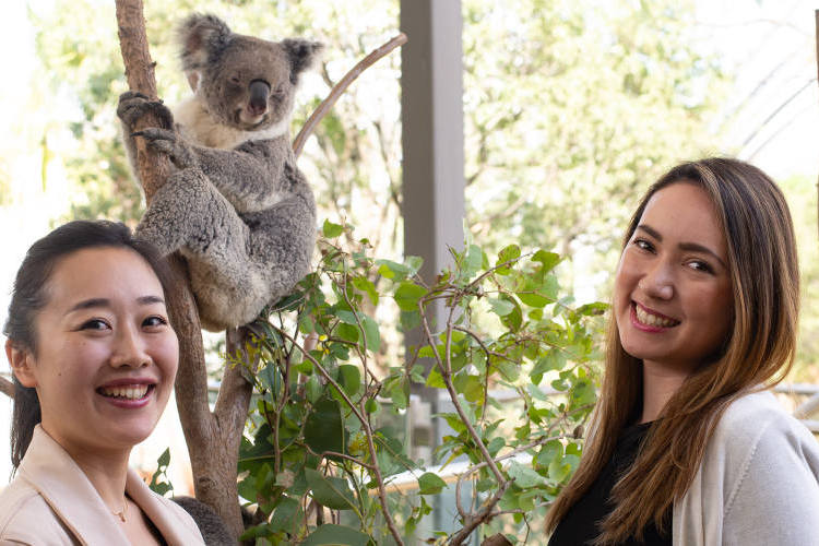 ワイルドライフ・シドニー動物園 コアラと...の写真
