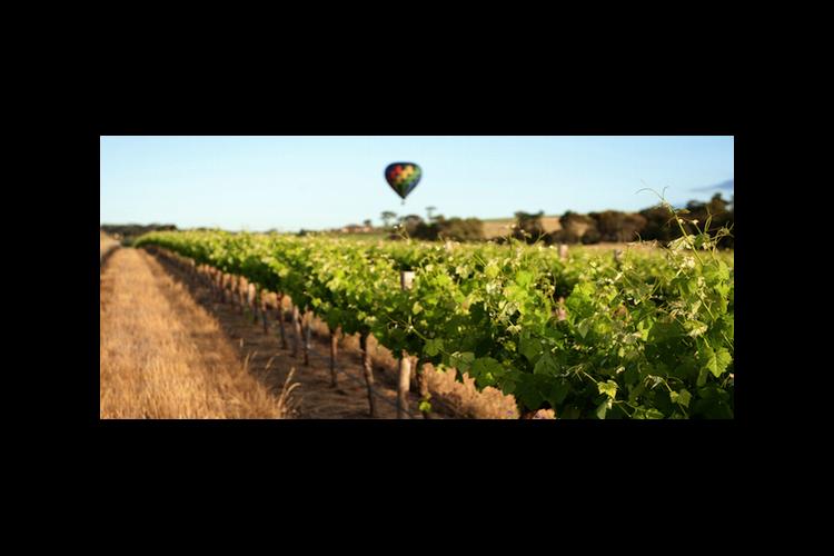 アデレード発 バロッサ・バレー ワイン&...の写真