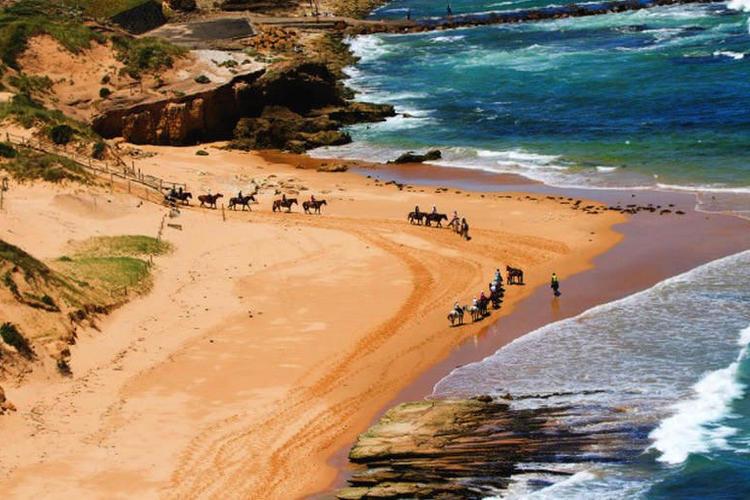 メルボルン モーニントン半島乗馬体験(1...の写真