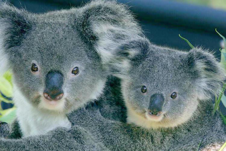 タロンガ動物園 & 48時間 フェリーチ...の写真