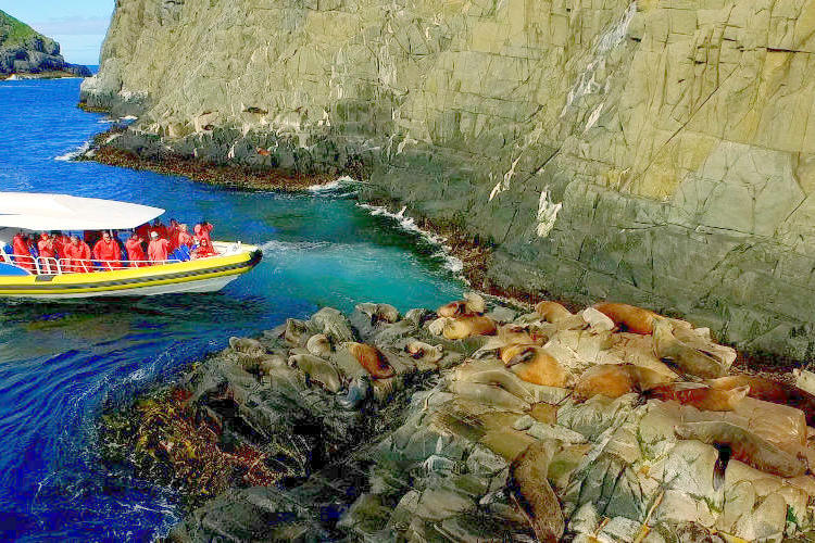 ホバート発 ブルーニー島ワイルドライフク...の写真